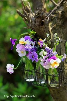 """Tis' one day I walked along and picked pansies just for me. I stuck them in bottles three to nest hanging in the tree."" Bonnie Haldeman"