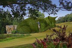 The Topiary Cat needs constant maintenance, and I hate heights. Still, it has to be done.