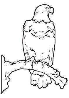 Nice Eagle Coloring Book 65 print coloring image