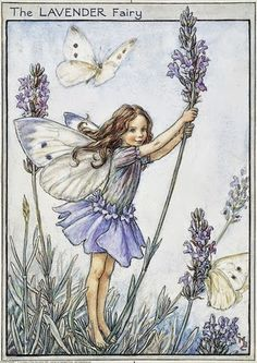 The Lavender Fairy. Vintage flower fairy art by Cicely Mary Barker. Taken from 'Flower Fairies of the Garden'. Click through to the link to see the accompanying poem. Cicely Mary Barker, Elfen Fantasy, Fantasy Art, Flower Fairies, Vintage Wall Art, Vintage Prints, Vintage Paper, Vintage Fairies, Vintage Flowers