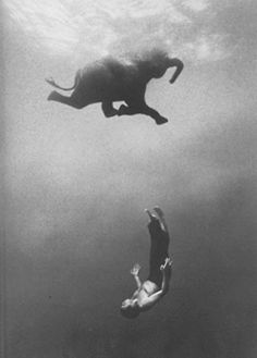 swimming with elephants
