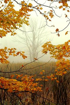 ~ Autumn ~ Framing October, Cuyahoga Valley National Park, Ohio by wood_owl