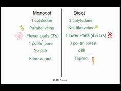 Monocots vs Dicots - for all of you out there trying to figure out WHAT in the world this is! :)