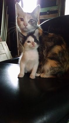Beautiful Mommy cat with her precious little baby