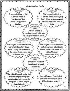 Book Study: Bats Nonfiction and Stellaluna 6 Day Lesson