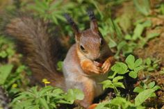 Would you like to keep squirrels out of your garden? Try these humane ways to control the squirrels and keep them from destroying your garden.  marygold