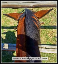 The day I almost fell of a horse - Mom Making Memories Riding Lessons, Making Memories, Funny Stories, Horse Riding, Survival, Horses, Mom, Fall, Autumn