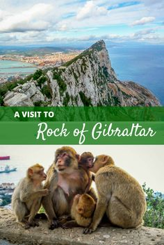 The Rock of Gibraltar is a small piece of the United Kingdom on the southern edge of Spain. Take the cable car to visit the summit.and the monkeys! Cool Places To Visit, Places To Travel, Cuba, Rock Of Gibraltar, Vie Simple, Spain Travel Guide, Madrid, Places Worth Visiting, Barcelona