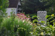 Ogród do kwadratu - strona 449 - Forum ogrodnicze - Ogrodowisko