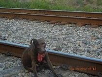 Dog who survived run in with train in Florida gets a home--Happy ending.