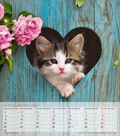 Katzenkinder Kalender 2014