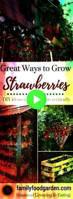 Ideas of Planters - So many ways to grow strawberries! Growing strawberries in containers strawberry planters & strawberry pots is a great way to keep the strawberries off the ground & away from pests. Grow strawberriesMoreMoreBest Ways to Gr Potted Strawberry Plants, Strawberry Planters, Strawberry Garden, Types Of Strawberries, Growing Strawberries In Containers, Container Gardening, Gardening Tips, Strawberry Price, Everbearing Strawberries