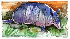 Armadillo #Watercolor #Art Print by Teri Kman