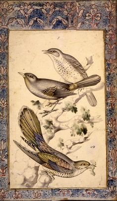 Muhammad Hasan      Birds on a branch  Page from an album  Mid-19th century  Tehran, Iran  Gouache and water-colour on paper