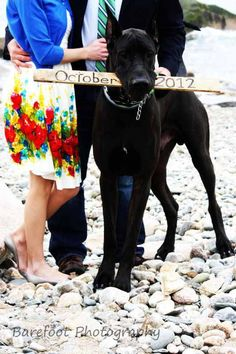 Save the date Great dane. Omg I wish I would have thought of this!!!!