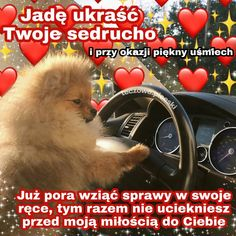 Funny Sms, Funny Texts, Cute Photos, Cute Pictures, Cute Sentences, Fat Memes, Sweet Texts, Cute Pokemon Wallpaper, Polish Memes
