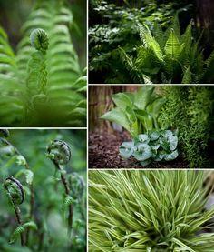 my take on shade garden by bettye