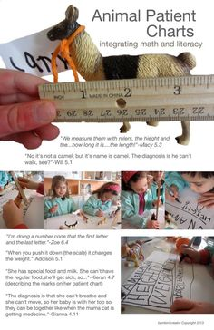 """""""When animals become patients they must be properly measured, weighed, and given proper code for the medical system.""""- Bambini Creativi ≈≈"""