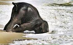 Resultado de imagen para elephant beach