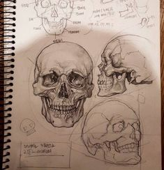 Excellent Pictures skull drawing tutorial Thoughts Desire to learn how to draw? You're in the proper place. Whether you're a starter trying to find Drawing Sketches, Art Drawings, Sketching, Drawings Of Skulls, Realistic Pencil Drawings, Anatomy Sketches, Poster Drawing, Pencil Drawing Tutorials, Graphite Drawings