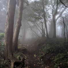 Hiking Mt Oyama in Japan today made for some eerie scenery. Dark Green Aesthetic, Nature Aesthetic, Autumn Aesthetic, Dark Paradise, Forest Fairy, Dark Forest, Aesthetic Pictures, Scenery, Landscape