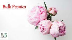 Buy Peonies, Buy Flowers, Lilies, The Good Place, Wedding Flowers, Wedding Decorations, Irises, Lily, Wedding Decor
