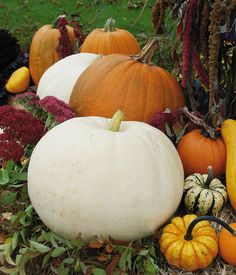 Different types of Pumpkin and Gourds