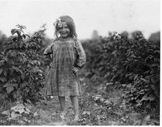 CHILD LABOR: Laura Petti, a 6 year old berry picker on Jenkins farm, Rock Creek, Maryland, 1909 photographer Lewis Hine Antique Photos, Vintage Pictures, Vintage Photographs, Old Pictures, Old Photos, Vintage Images, Lewis Wickes Hine, Fotografia Social, The Good Old Days