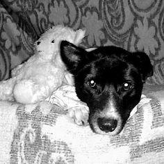 Ainda sobre a #slumberparty_spaykcute continua! Quem ainda não postou sua foto da festa do pijama ainda dá tempo! Vamos Madrugar aumigos dormir tarde e assistir filmes de terror!  Hoje as mommys liberaram!  Siga meu perfil e poste uma foto com a hashtag: #slumberparty_spaykcute  Parceria: @itsjuliedog @lolla_lhasalol @shiba_woody  #dog #dogs #animais #animals #cachorro #pet #pets #puppy #cute #instadog #doglover #ilovemydog #love #dogsofinstagram #petsofinstagram #dogstagram #bordercollie…