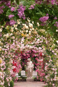 blomme in oorvloed !! Pragtige tuin..