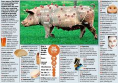 From bullets to bread and beer, tambourines to toothpaste...all of that plus another 180 other things to do with a pig | Mail Online