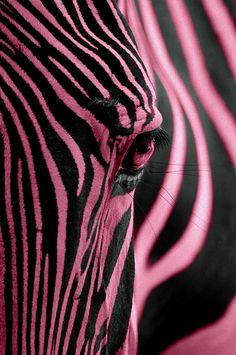 Pink zebra ~ so pretty...don't you wish she was real? :)