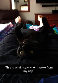 17 Funny Cat Memes #cute #cats #kitty #kitten