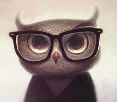 Cute Nerdy Owl! :P
