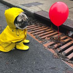"Doug The Pug @itsdougthepug - ""‪Will float for piz...Yooying"