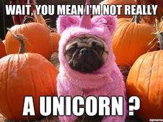 owl unicorn meme - Google Search
