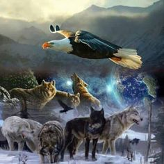 Native American Wolf, Native American Pictures, American Indian Art, American Indians, Eagle Pictures, Wolf Pictures, Spirit Animal Totem, Animal Totems, Fantasy Wolf