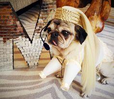 Madonna pug