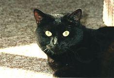 Superstiție - Wikipedia Animals, Animales, Animaux, Animal, Animais, Dieren