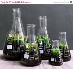 SALE Chemistry Terrarium Gift Set with Indoor Plants in Glass Science Flasks