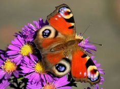 Butterfly Nature Insects