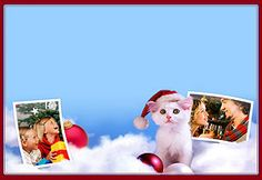 Meow! Check out our #Christmas #Kitty letter.