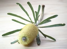 Cactus Plants, Fruit, Flowers, Beauty, Cacti, Cactus, Royal Icing Flowers, Beauty Illustration, Flower