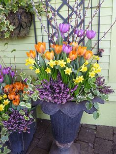 Beautifully put together with orange, yellow and mauve, including heather, narcissus, vinca vine, tulips and pussy willow.