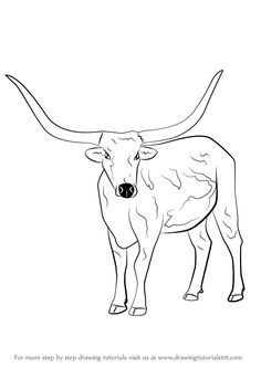 Learn How to Draw a Longhorn Cattle (Farm Animals) Step by Step : Drawing Tutorials Longhorn Cattle, Longhorn Steer, Horse Drawings, Ink Pen Drawings, Farm Fashion, Cow Pictures, Cattle Farming, Bull Horns, Wood Patterns