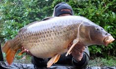 27IB Common From Braxted