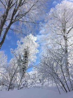 wallpaper et fond d'écran hiver saison nature paysage neige Wallpapers Wallpapers, Snow, Photos, Outdoor, Woman, Flowers, Winter Wallpaper, Travel, Photography