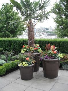 tropical landscape ideas | tropical landscape by Glenna Partridge Garden Design