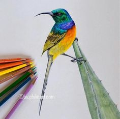 Beautiful Drawing by Sallyann Painting & Drawing, Watercolor Paintings, Color Pencil Art, Beautiful Drawings, Faber Castell, Art Techniques, Pencil Drawings, Colored Pencils, Sketches
