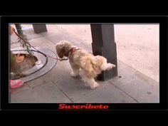 Multas de 750EUR por no Limpiar los Orines de los Perros